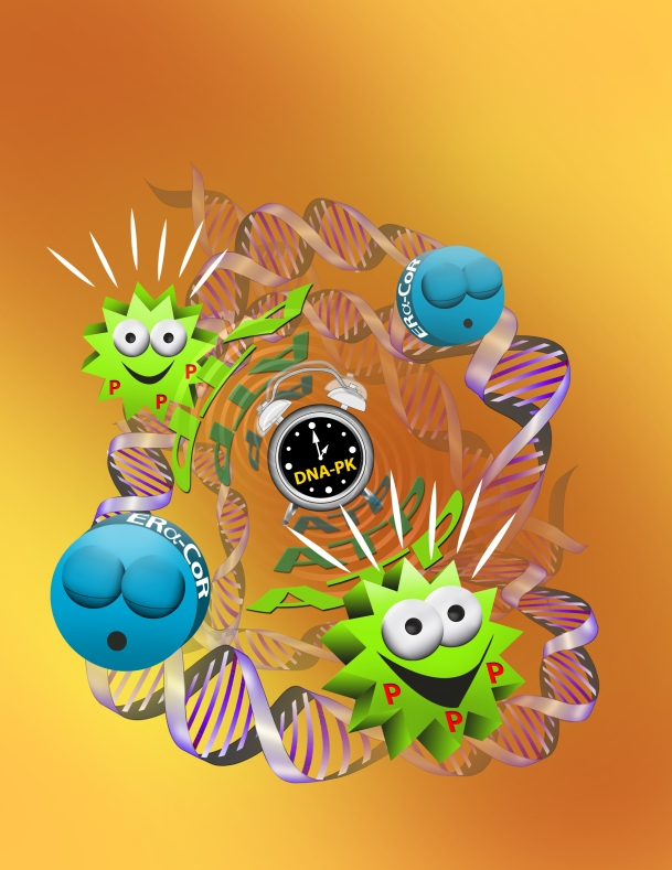 "This cartoon depicts the action of DNA-dependent protein kinase (DNA-PK) as the ""alarm clock"" that activates inactive (""sleepy"") estrogen receptor alpha -coregulator (CoR) protein complexes by phosphorylation (P) that requires ATP. While these complexes bind at many sites on the  DNA of cells, for simplicity, we depict only a few. The article it illustrates appeared in the journal  Molecular Cell (Molecular Cell, Volume 51, Issue 2, 185-199, 11 July 2013). http://www.cell.com/molecular-cell/retrieve/pii/S1097276513004449 First author Dr. Charles Foulds, assistant professor in the same department, said the findings in this report have prompted new research in understanding breast cancer."