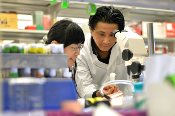 Drs. Wu-Lin Charng and Shinya Yamamoto look at the fruit flies that are the basis of their work.