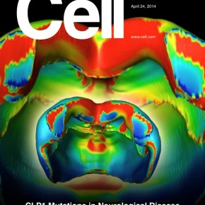 Image of the Month: CoveringScience