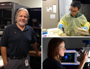 From left: Dr. Gonzalo Viana Di Prisco, assistant professor; Wei Huang, graduate student; Dr. Shelly A. Buffington, postdoctoral fellow, all in the department of neuroscience.