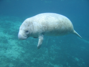 Evolution of marine mammals to water converges in some genes