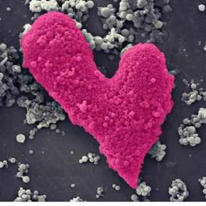 Image of the Month — Love for VaccineDevelopment