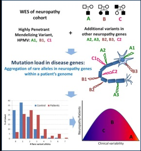 The number of rare variant genes contributes to symptoms of genetic disease