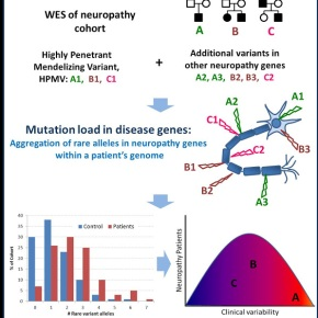 The number of rare variant genes contributes to symptoms of geneticdisease