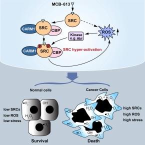 Super stimulation makes master regulators into cancer cellkillers