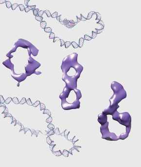 The writhing and coiling of DNA drives cell activity