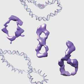 The writhing and coiling of DNA drives cellactivity