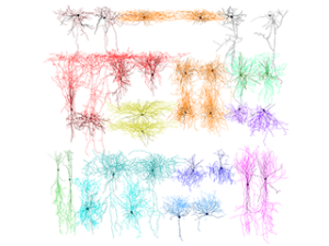 axns and dendrites
