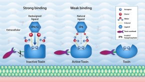 One atom can make a difference: Hydrogen-bonding pairing helps design better drugs to neutralize gut bacterial infections