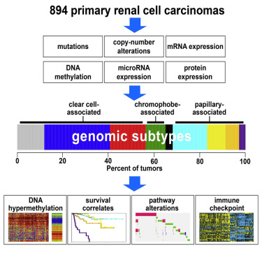 A comprehensive molecular analysis of 894 primary renal cell carcinomas resulted in nine subtypes defined by systematic analysis of five genomic data platforms. Each major histologic types represent substantial molecular diversity. Presumed actionable alterations include PI3K and immune checkpoint pathways. Credit: Dr. Chad Creighton/Cell Reports, 2016.