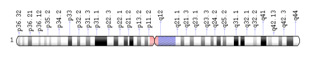 Human chromosome 1 showing the 'p' (left) and 'q' arms. Geneticists use diagrams called idiograms as a standard representation for chromosomes. Idiograms show a chromosome's relative size and its banding pattern, which is the characteristic pattern of dark and light bands that appears when a chromosome is stained with a chemical solution and then viewed under a microscope. These bands are used to describe the location of genes on each chromosome.