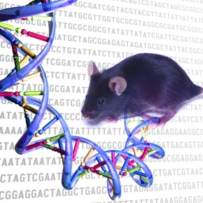 $27.9 million from NIH to support Baylor's Knockout MouseProject