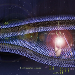 Image of the Month: Artist's rendition of antigenrecognition