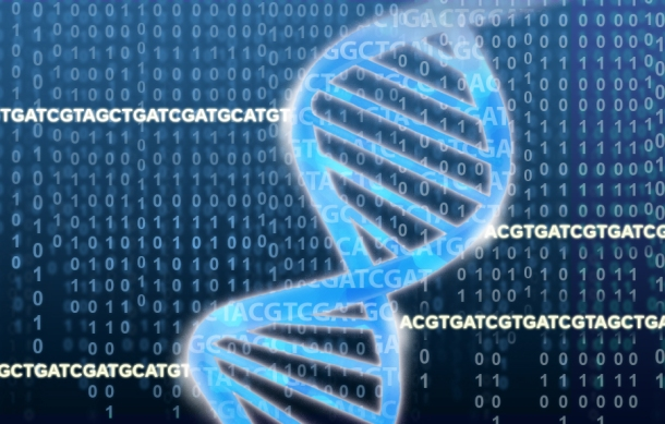 The DNA double helix rests on a field of ACGTs and binary numbers. Credit: Jonathan Bailey, NHGRI