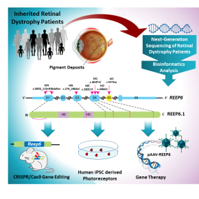 Improving the view on the genetic causes of retinitispigmentosa
