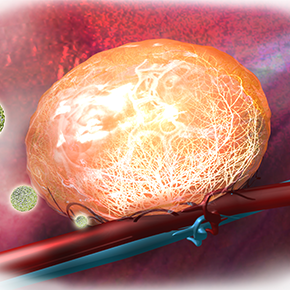 Image of the Month: Lighting up blood vessels in a tumor