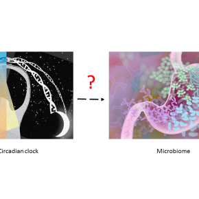It's all connected: circadian clock, microbiome and response to diet
