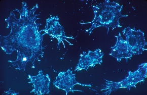 CD44s, not CD44v, contributes to cancer survival