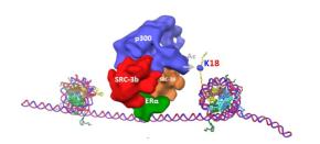 How estrogen regulates geneexpression
